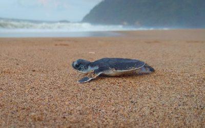 Sukamade turtle Beach
